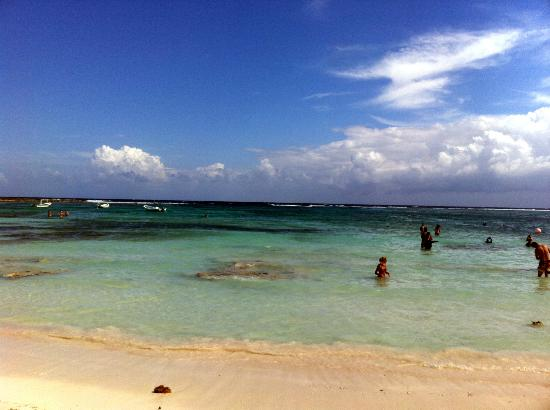 Plage d'Akumal: Beautiful day to see turtles - water is clear!