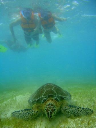 Akumal Beach: Snorkeling at Akumal