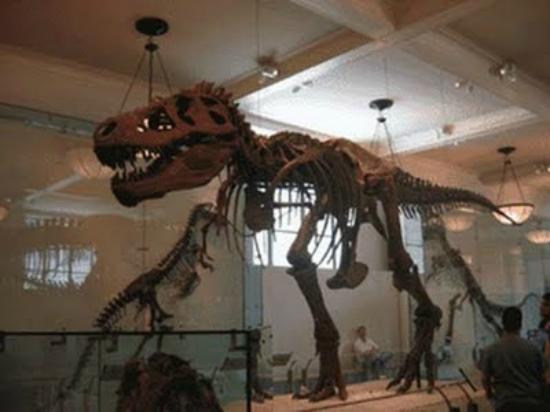 Museo Argentino de Ciencias Naturales Bernardino Rivadavia: Sala de Animales prehistoricos