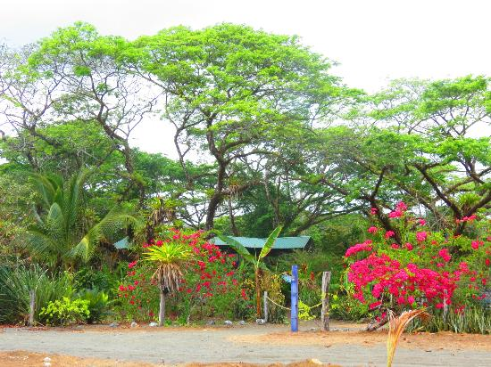 The Pearl of the Osa: The Grounds