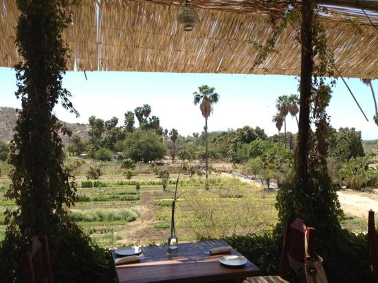 Organic Farm Tour at Huerta Los Tamarindos: View from the balcony over part of the farm.