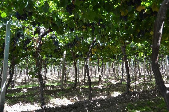 Casa del Visitante - Familia Zuccardi: Wine Field