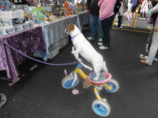 Puppy rides bike at market! - Picture of Queen Victoria Market ...
