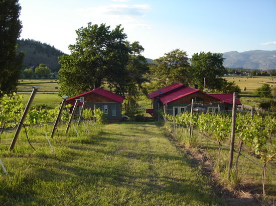 Summerland, Canada: Vineyard View