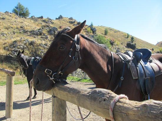 Mackenze Alpine Horse Trekking
