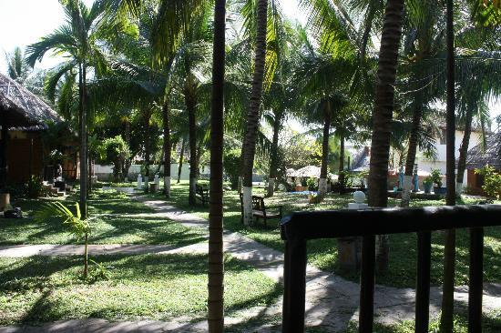 Green Coconut Resort : Looking from my room.