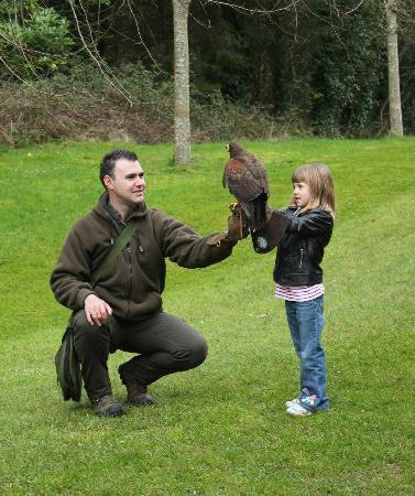 Dromoland Castle Hotel: Falconry lesson