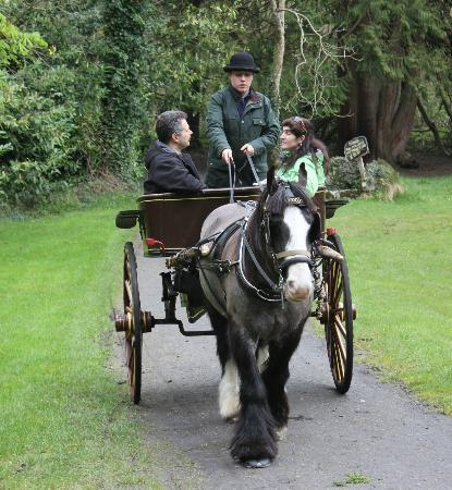 Dromoland Castle Hotel: Horse and cart trip with Shawn
