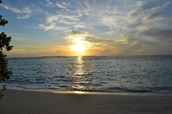 Asdu Sun Island: Asdu alba