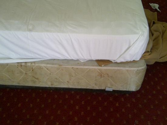 Knights Inn Laurel: mattress and box sping