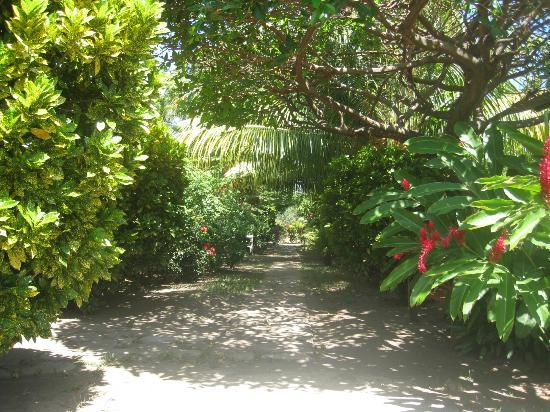 Hotel Playa Santa Martha: Pathway from the beach