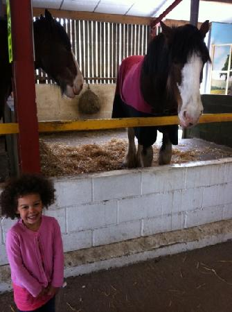 Farmer Teds Farm Park: we loved this gentle horse
