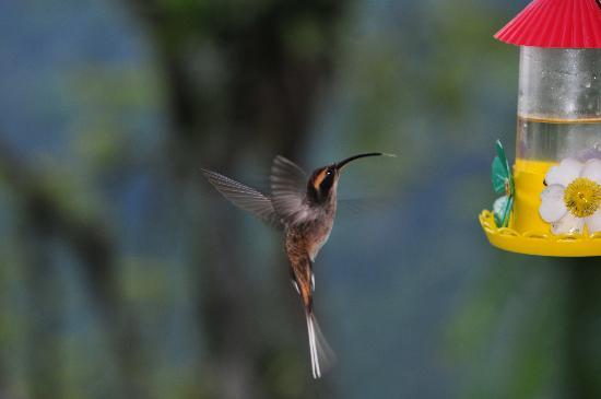 Itatiaia, RJ: Stunning Humming Birds