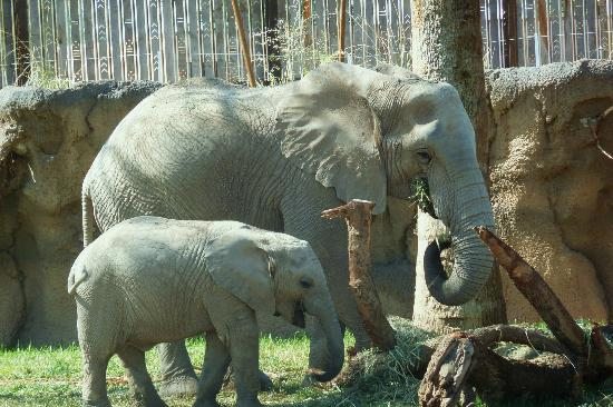 Reid Park Zoo : Mother and two year old elephant