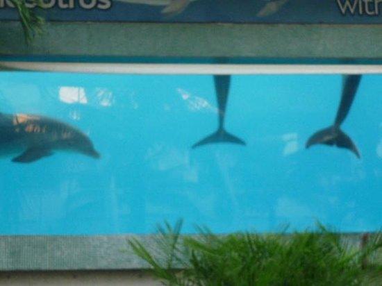 La Isla Shopping Village : Los delfines son hermosos...
