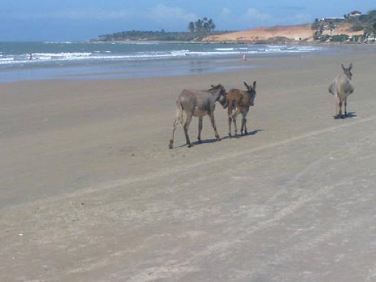 Praia da Lagoinha : praia de lagoinha