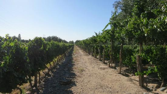 Posada El Encuentro: One of the vineyards we visited