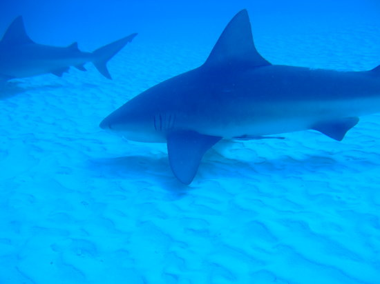 Bull Sharks Diving Center