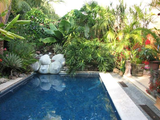 Casa Candiles Inn: Casa Candiles - Lush foliage surrounds the pool area