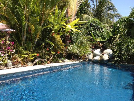 Casa Candiles Inn : Casa Candiles - pool