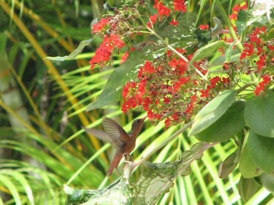 Casa Candiles Inn: Casa Candiles - Hummingbird at the pool