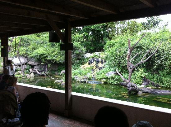 Monkey Jungle: inside
