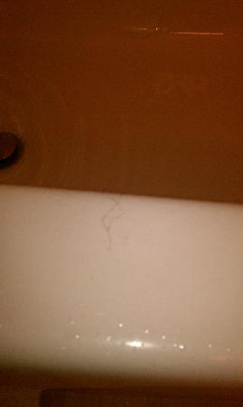 Extended Stay America - Sacramento - Roseville : Certainly not MY hair...