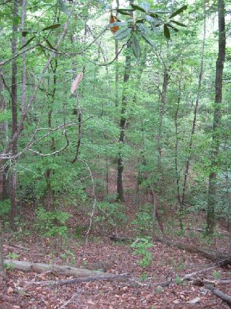 Torreya State Park: Trails