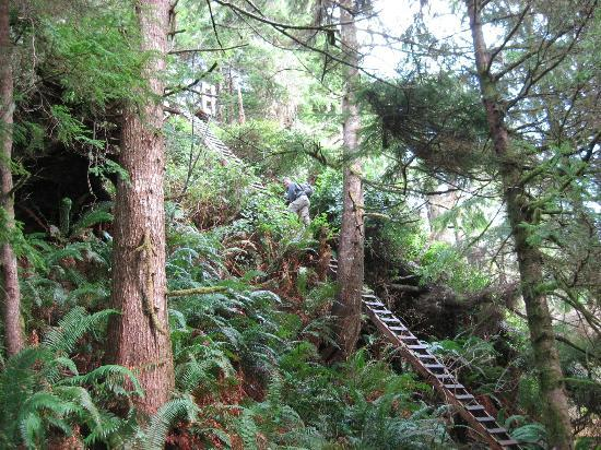 Cottages at Woods End Landing in Bamfield : Ladders on the West Coast Trail