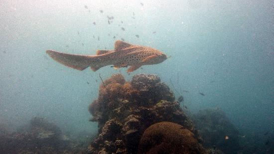 Νόσι Μπε, Μαδαγασκάρη: Requin Léopard