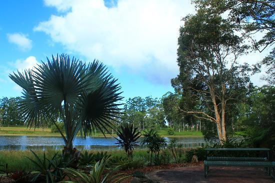Noosa Botanic Gardens: 7