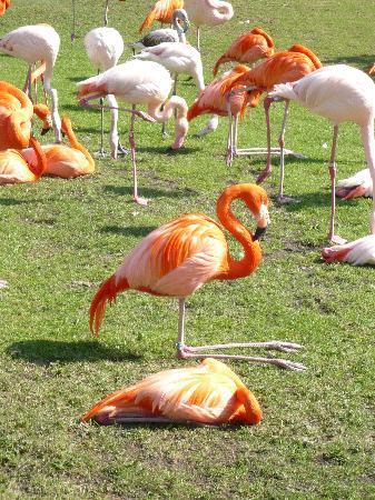 Cologne, Germany: Flamingos geniessen die erste Frühlingssonne
