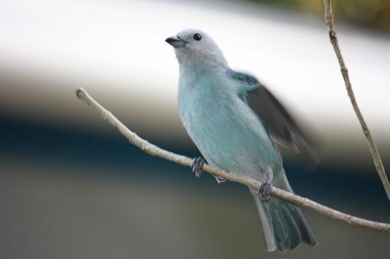 Jemas Guesthouse and Apartments: Vögel im Garten von Jema