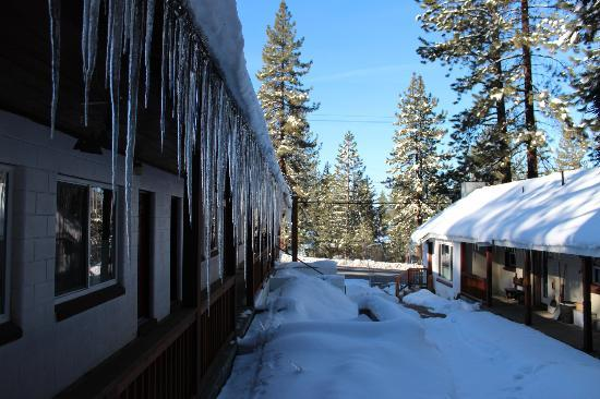Hostel Tahoe: view of main yard area and across to lake