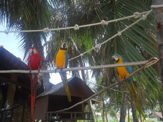 Serrambi Resort: araras do hotel