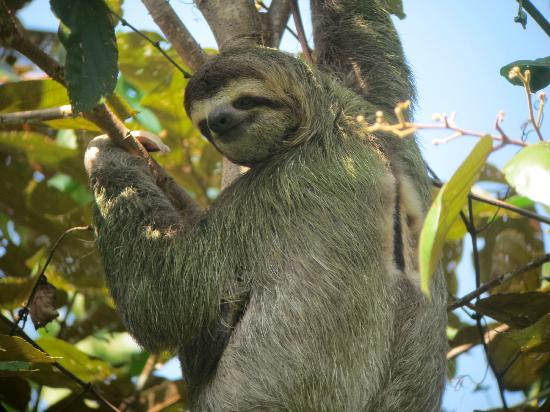 Nature Specialist Tours: Sloth