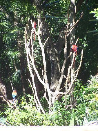 Piste Cyclable sur Paseo Xaman-Ha : Entrée principale Xaman-Ha Aviary