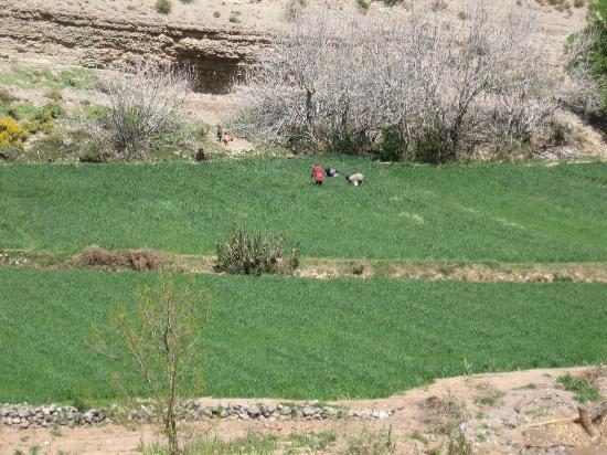 Dades Gorge: Donne Berbere al lavoro nella Valle del Dadés