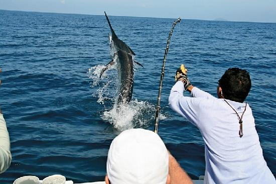 World class big game fishing picture of panama big game for Big game fishing