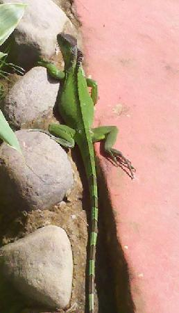 Hotel El Jardin: Our visitor at the pool