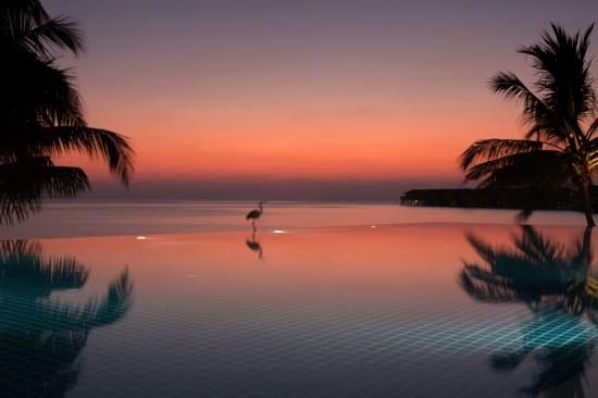 Vilamendhoo Island Resort & Spa: sunset pool and bar