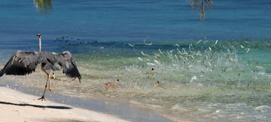 Vilamendhoo Island Resort & Spa: breakfast
