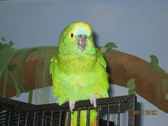 Black Hills Parrot Welfare & Education Center: Beautiful feathred friend up for adoption