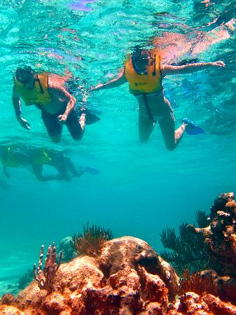 Plage d'Akumal: Snurkling with corals and fish!