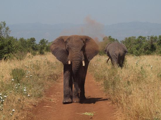 Rhino River Camp: We were in his way!
