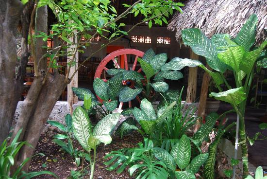 Hotel Macanche Bed & Breakfast: Jardin tropical cachant l'espace petit déjeuner