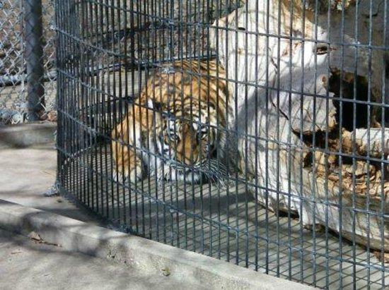 Lagoon Amusement Park: Tiger