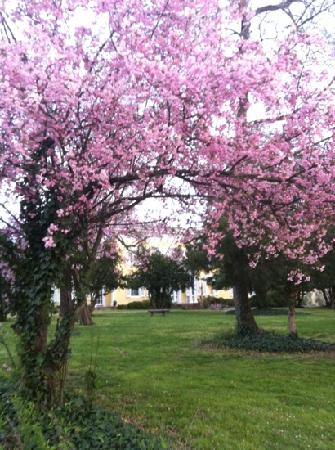 Causey Mansion Bed & Breakfast: Causey in bloom