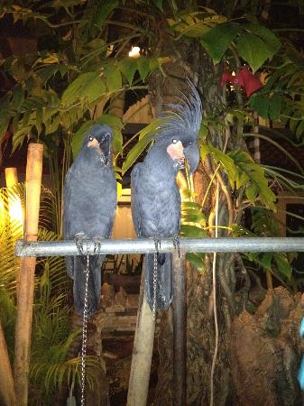 Grand Barong Resort : birds