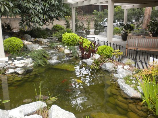 Koi pond picture of south coast botanic garden palos for Koi pool water gardens thornton